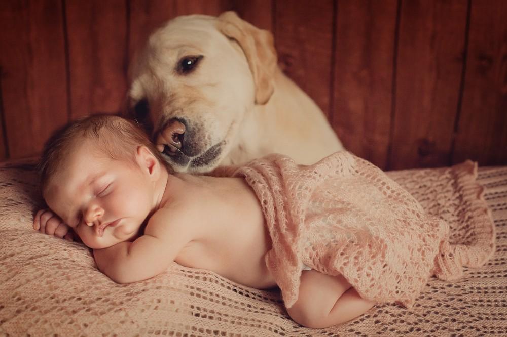 animais e bebês
